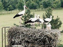 Lichnov má letos na komíně bývalé školy ornitologickou atrakci. Místní pozorují čapí hnízdo už celá desetiletí, ale pět mláďat tu letos viděli poprvé.