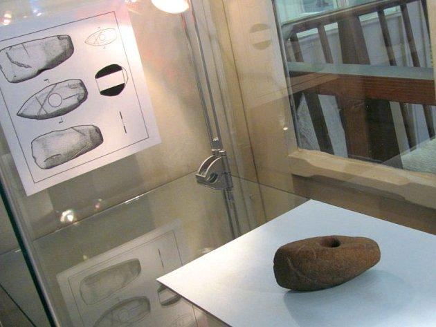 Sekeromlat, nalezený při třídění brambor, uvidí návštěvníci výstavy ve Flemmichově vile v Krnově.