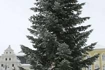 Z Nezvalovy ulice pochází strom, který od úterý 26. listopadu navozuje vánoční atmosféru na náměstí Míru v Bruntále.