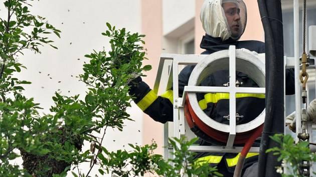 Hasiči na krnovském náměstí všem ukázali, že si umí poradit nejen s ohněm, ale také se včelím rojením.
