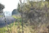 """Pavouci plachetnatky jsou tak malí, že je pouhým okem téměř nevidíme. V období babího léta ale jejich vlákna nelze přehlédnout. Snímek zachycuje """"babí léto"""" na Osoblažsku."""