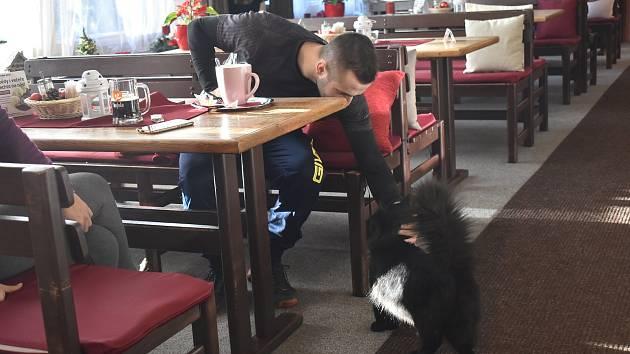 Hostům restaurace Na Hvězdě v Malé Morávce.se věnují kromě personálu také kočičky. Když je podnik zavřený, můžete si je pohladit aspoň na terase.