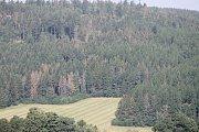 Lesy na Bruntálsku jsou v rámci celé republiky v roce 2016 nejvíce postiženy suchem a napadá je kůrovec, hrozí napadení houbou václavkou.
