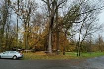 V zámeckém parku v Linhartovech se jeden ze stromů nebezpečně naklonil.
