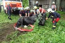 Během nedělního dopoledne zasahovaly dvě jednotky hasičů na statku ve Světlé Hoře. Staršímu koni se totiž zaklesla noha v betonové jímce a nemohl z ní ven.