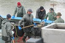 Výlov rybníka Výtažníku doprovázeli rybáři i odborným výkladem. Vylovili zde zhruba celkem čtyřicet metráků ryb.
