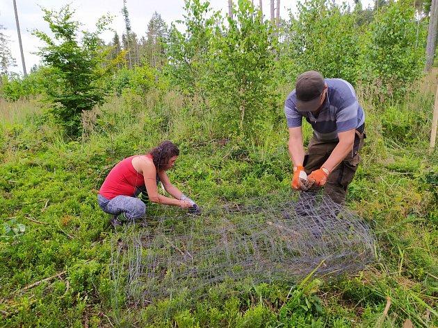 Ochrana budoucího lesa je cílem dobrovolníků, kteří pomáhají zalesňovat holiny nad Městem Albrechticemi.