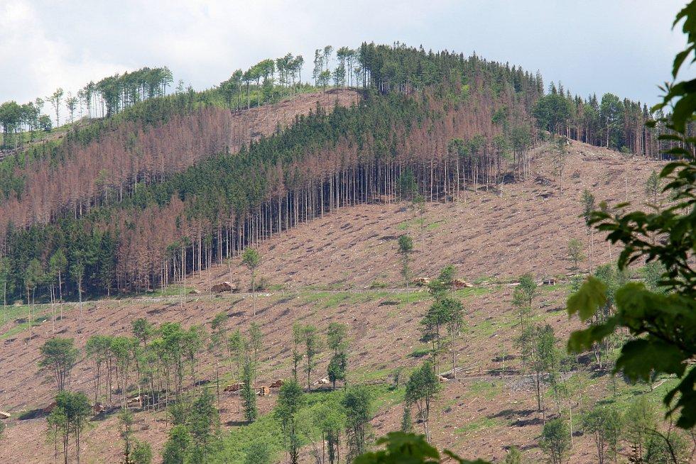 Kůrovcové lesy v Jeseníkách.