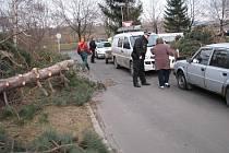 Spadlý strom na Sídlišti pod Cvilínem v Krnově likvidovala profesionální jednotka hasičů.