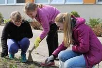 Zakládání zahrady u školy v bruntálské Jesenické ulici se pilně věnovaly děti ze třetí třídy i s paní učitelkou Šárkou Burzovou.
