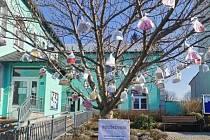 Před obecním úřadem v Jindřichově rozkvetl strom rouškovník. Foto: Martin Korduliak, starosta Jindřichova