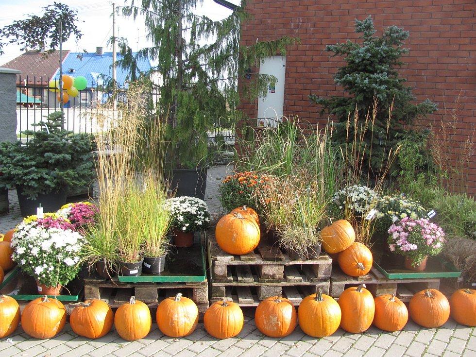 Dýňové slavnosti v zahradnictví Flora v Úvalně.