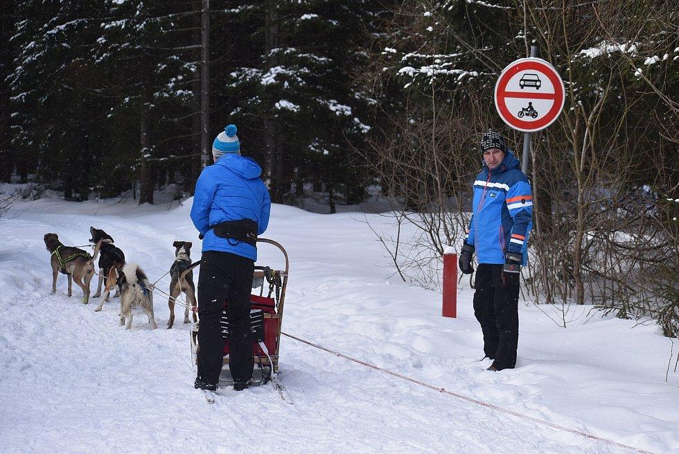 Chcete vědět, jaké to je řídit saně se psím spřežením zimní krajinou? V Jeseníkách z vás profesionálové udělají mushera.