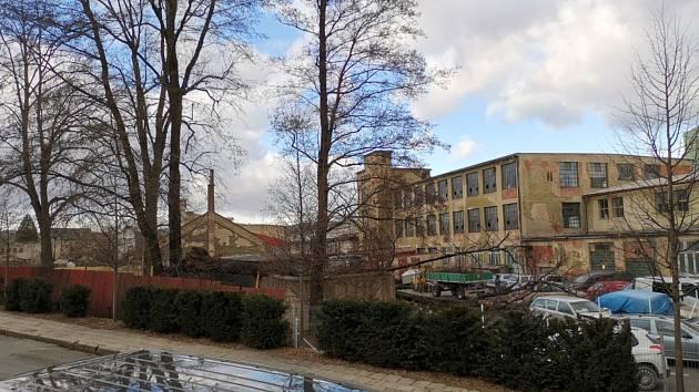 Po orkánu Sabina zůstal v areálu Karnoly vyvrácený strom. Je vidět z Chářovské ulice.  Foto: Lukáš Matela