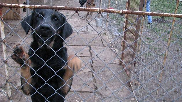 Slezské Pavlovice na Osoblažsku jsou místem, kde najdou v útulku odbornou péči zatoulaní psi z rozlehlé spádové oblasti od Šumperka, přes Břidličnou, Rýmařov, Jeseník a Zlaté Hory až po obce na Opavsku. Nově také krnovští psi.