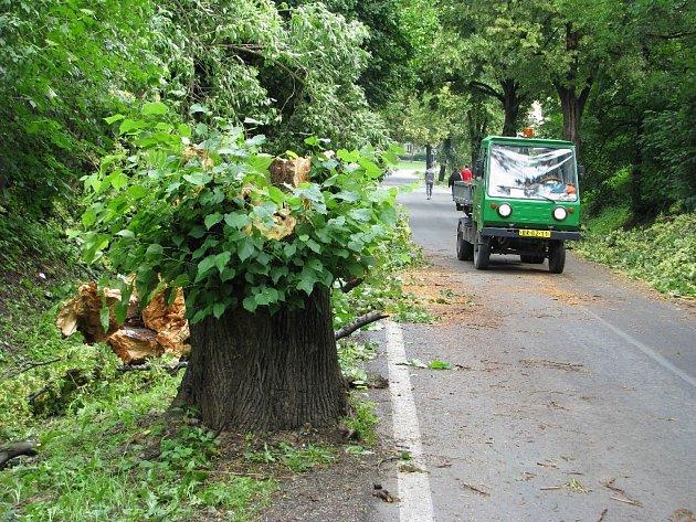 Bouře zlomila lípu přímo na silnici, která jako jediná spojuje Cvilín s Krnovem. Zahrádkáře uvězněné na Cvilíně museli osvobodit záchranáři s motorovými pilami.