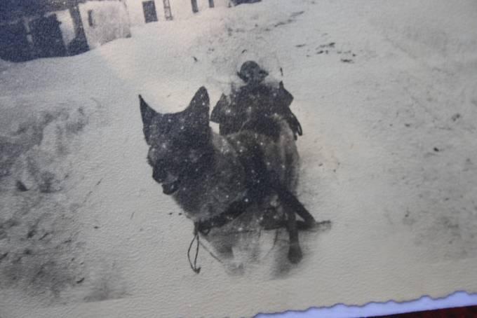 Druhý případ tažného psa je z Petrovic. Pekař Ludvík Svoboda zde zapřahal vlčáka Petra v létě do vozíku a v zimě do sáněk. Jeho psí postroj je uložen v muzeu v Janově.