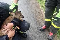 VYDĚŠENÉ ZVÍŘÁTKO zabloudilo v Třemešné a spadlo do potoka. V náručí hasičů se šťastně dostalo na břeh.