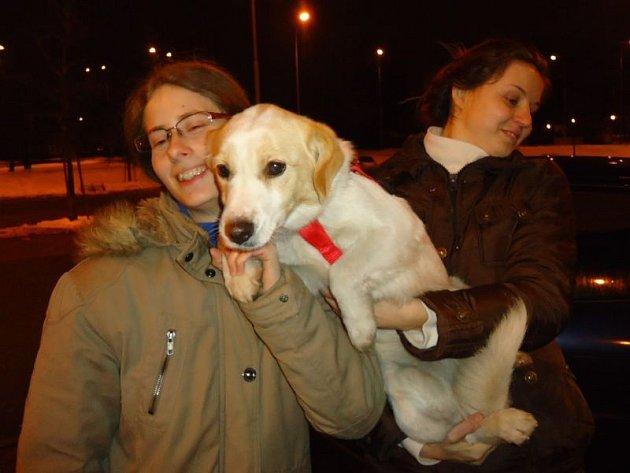 K zachránkyním se labradorka Betty chovala jako k vlastním páníčkům. Měla štěstí, že se jí ujali dobří lidé, a že jí pomohli nalézt ztracený domov.