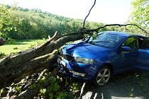 Dramatická nehoda: strom padal a řidič brzdil.