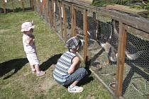 Králíci, holubi i drůbež nebyli na výstavě jen pro potěchu očí, ale i pro doplnění či obnovu domácích chovů návštěvníků.