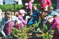 Děti pomáhaly s výsadbou trvalek v novém sadu ve Městě Albrechticích.