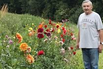 Jiřinkové království Emila Oščiatky, který má na své zahradě na dvě stě padesát různorodých jiřin.
