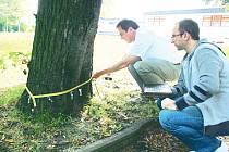 Vzrostlé stromy v krnovských Smetanových sadech přijdou na řadu jako první, park totiž využívá velké množství lidí. V minulosti už tady navíc k nebezpečným pádům stromů došlo.