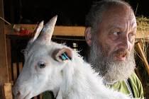 Ivan Němeček s jedním z nejnovějších přírůstků v areálu hornobenešovské kozí farmy. Nyní se provozovatel chystá pořádat celostátní farmářský trh.