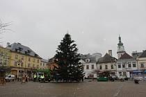 Pracovníci Technických služeb Bruntál upravili původně nezvhlednou jedli, která bude letošním městským vánočním stromem.