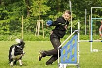Agility, soutěž, v níž jde o souhru psa a člověka. Jana Křivková se svou border kolií při závodech.