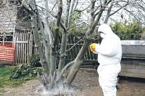 Housenky předivky zhoubné vyděsily obyvatele Ondrášova. Pohled na stromy obalené jemnými sítěmi, které housenkám poskytují ochranu, připomíná záběry z hororového filmu.