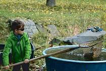 Výlov rybníku v Nové Pláni byl velkou atrakcí a zajímavou podívanou i pro nejmenší diváky, obzvlášť, když si mohli také sami něco vyzkoušet.