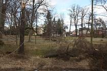 Bruntálská radnice vyzvala občany k opatrnosti při pohybu v městských parcích a při procházkách pod stromy.