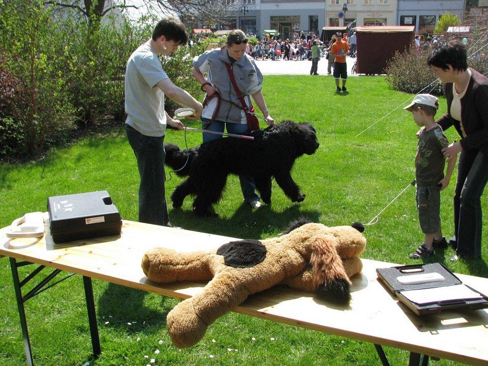 Den Země na krnovském náměstí - ukázka čipování psů.