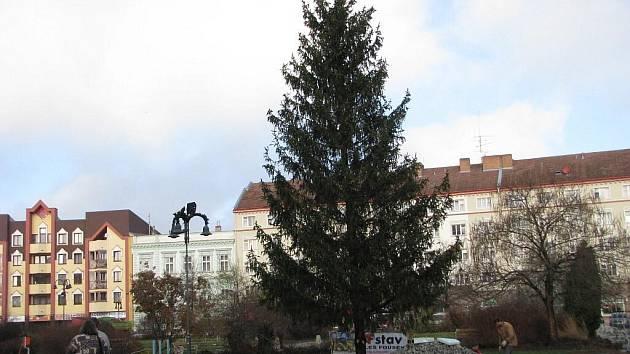 V letošním roce stojí vánoční strom na krnovském náměstí na jiném místě. Chvátalo se zde také se stavebními pracemi a úpravou náměstí, aby bylo do plánovaného jarmarku vše hotovo.