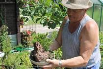 Jedna z bonsají, které pěstuje na svém pozemku Milan Janošík. I když mráz v květnu spálil jabloně, miniaturní dřeviny zimu v Jeseníkách přežily.
