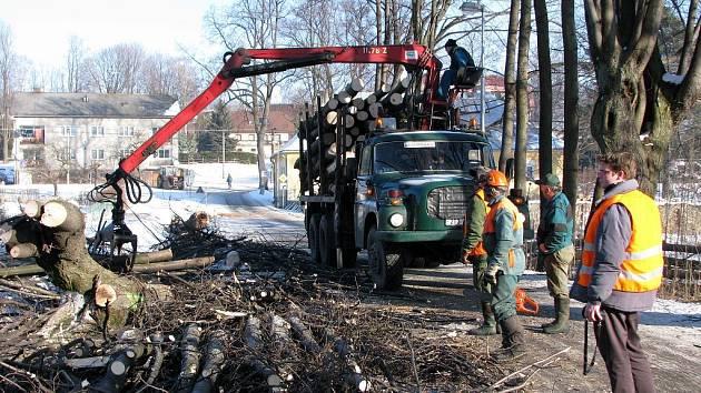 Nebezpečných stromů zbavují krajnici silnice z Vrbna pod Pradědem do Železné pracovníci Pradědského lesního závodu.