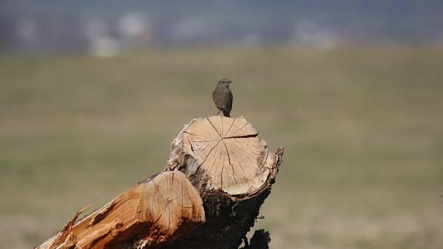 Český svaz ochránců přírody (ČSOP) vymyslel užitečnou aktivitu ty, kteří mají výhled do zahrady a sledují, jací ptáci tam přilétají na jaře.