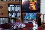 Iniciativa Cirkusy bez zvířat upozorňuje veřejnost, že  divoká zvířata jsou v cirkusech vykořisťována pouze za účelem výdělku a laciné zábavy, takže je nutné změnit zákon.   Ochránci zneužívaných zvířat často  zapomínají, že také v televizi se pod rouškou