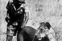 Joy Adamsonová, světoznámá spisovatelka a ochránkyně africké přírody, se narodila v roce 1910 v Opavě a byla zavražděna v roce 1980 v Keni.