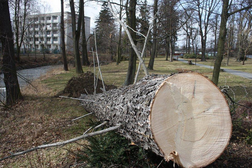 Vítr shazoval elektrické vedení a vyvracel stromy také v Bruntálu. Nejhůř byly zasažený Městský park. Největší lípa se vyvrátila přes plot na hospodu Roští.