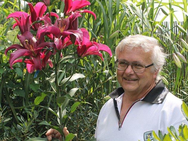 Každý rok povyrostou o třicet centimetrů lilie pěstitele Petra Masopusta v Mezině. Nejvýše se letos vytáhla nejtmavší stromová lilie Palazzo.