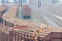 Vlaky plné dřeva dojely z Města Albrechtic až na Ukrajinu, ale tam uvízly v byrokratické pasti celníků. Zakarpatský kraj zakázal vyvážet přes hranici klády delší než jeden metr.