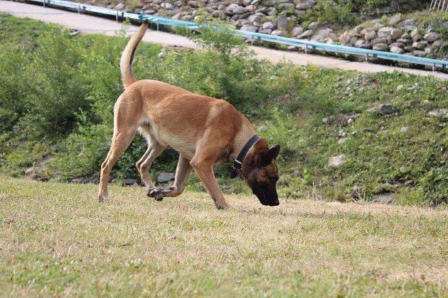 Služební pes Hektor.
