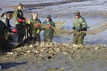 Ryby z Petrova rybníka u Krnova míří nejen na vánoční stůl, ale také do rybářských revírů v regionu, kde si je mohou následně ulovit rybáři.
