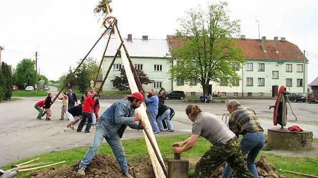 Ve Slezských Rudolticích staví májku tradičním způsobem, pomoc techniky je zapovězená.