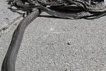 V roce 2004 byla v Krnově dokončena první etapa průmyslové zóny Červený dvůr. Příliš vysoký obrubník mláďata užovek nedokážou překonat, takže hromadně hynou na rozpáleném asfaltu.