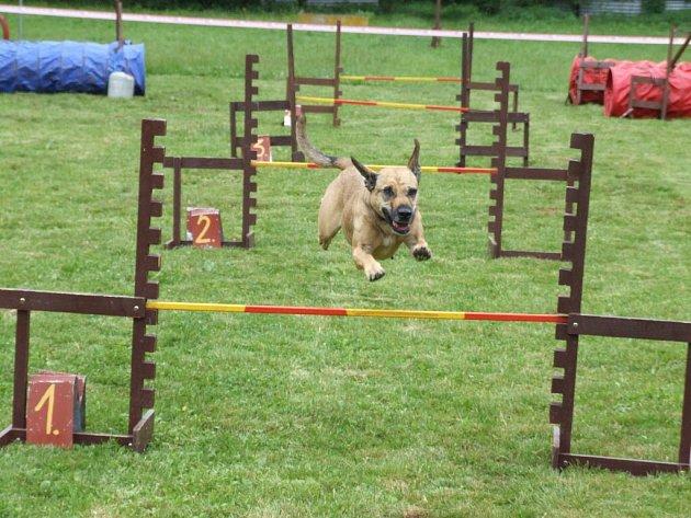 Dvě desítky lidí se sešly se svými psími miláčky na cvičišti Základní kynologické organizace Krnov, aby poměřily své výkony a popraly se s nástrahami psího parkuru.