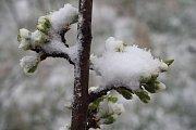 Na Krnovsko se v sobotu 13. dubna na pár hodin vrátila zima a sníh.